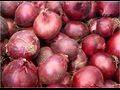 nasiona cebuli, cebula, siew cebuli, materia� siewny cebuli