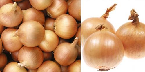 nasiona-cebuli