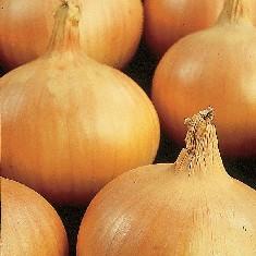 nasiona sturon